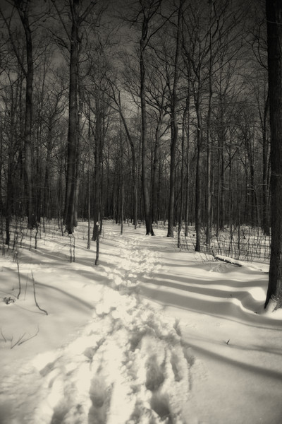 Winter's Embrace : Winter's Embrace : Magdalena Altnau Photography