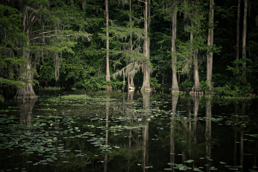 Caddo Lake III : Caddo Lake : Magdalena Altnau Photography