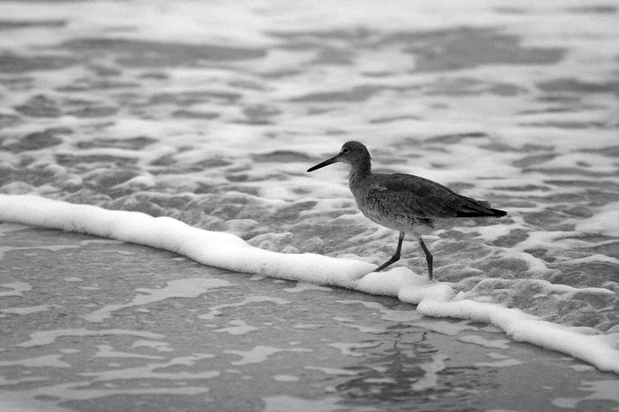 Galveston Bird I : Black and White : Magdalena Altnau Photography